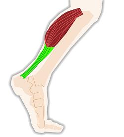 Bättre cirkulation i benen